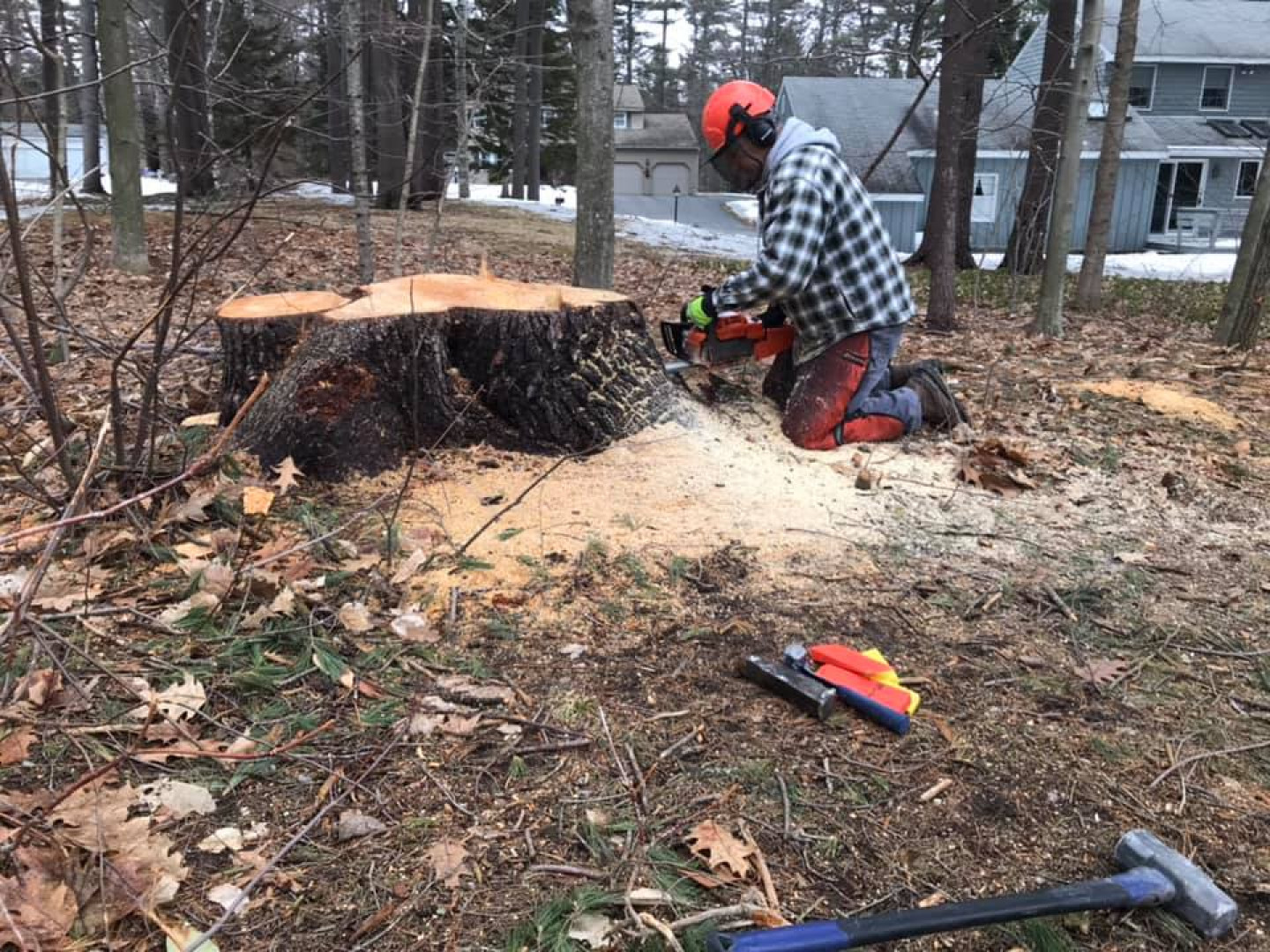 3 reasons to contact us for stump removal services